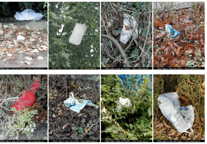 Plastic bags in trees and bushes.